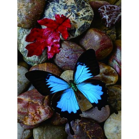 "Алмазная мозаика ""Бабочка на камне"""