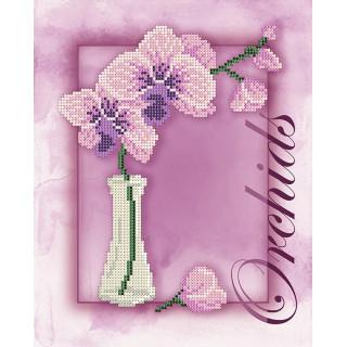 Цветы. Орхидея
